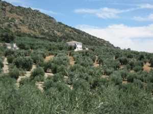 This is our home exchange home in Andalucia from which we traveled the short distance, 1 1/2 hrs, to Grenada, Spain